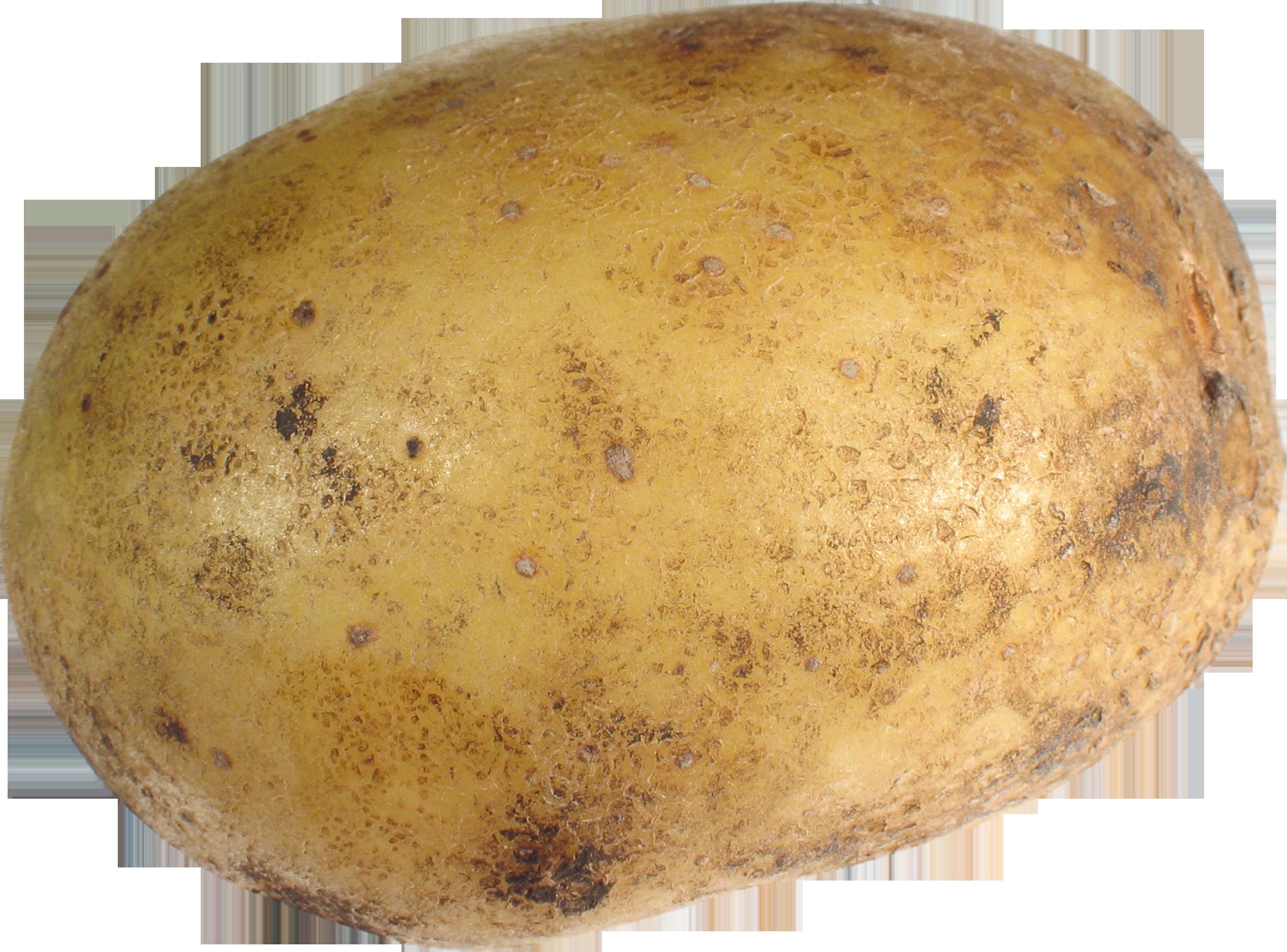 2231 Potato free clipart.
