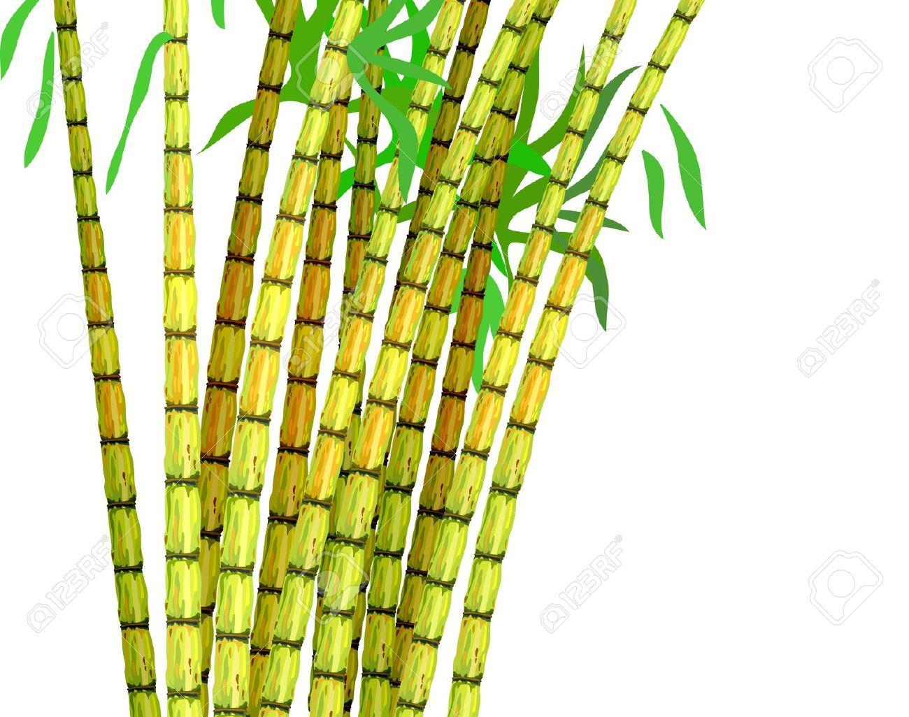 Sugarcane Plant Clipart.