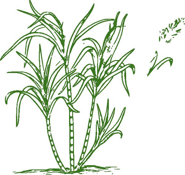 Sugar Cane Clip Art at Clker.com.