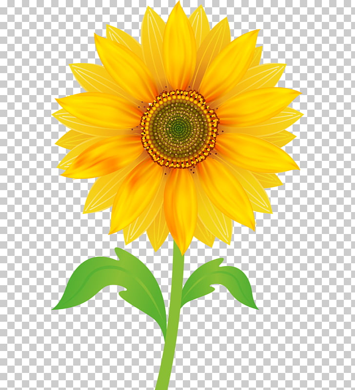 Free content , sunflower PNG clipart.