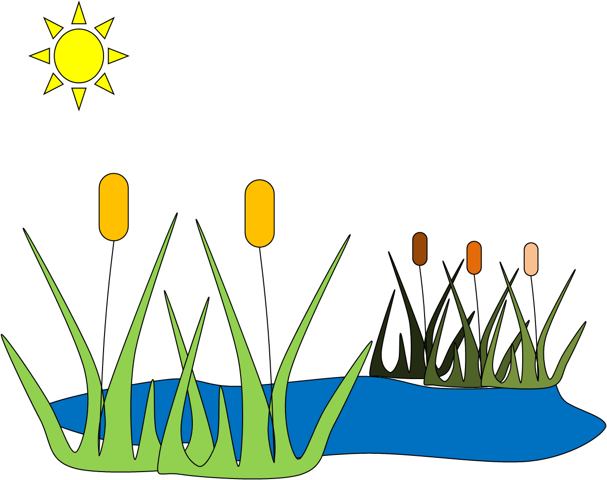 Pond C Image.