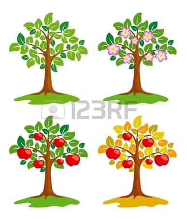 14,743 Apple Tree Stock Illustrations, Cliparts And Royalty Free.