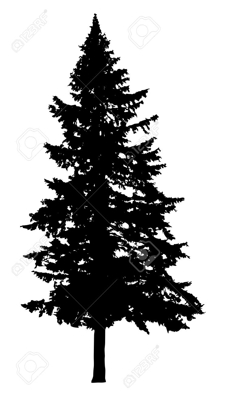Pine tree silhouette isolated on white background.