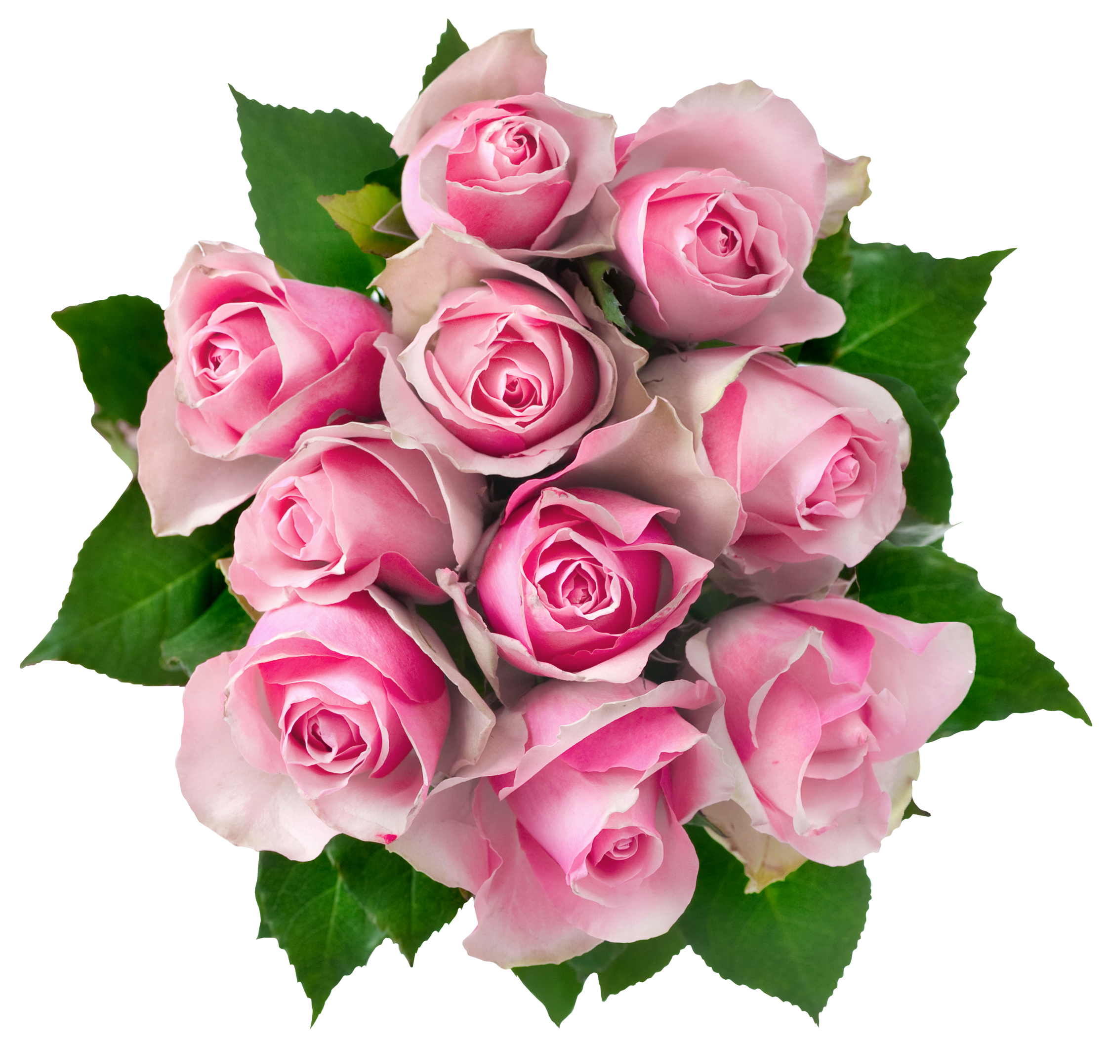 Transparent Pink Roses Bouquet PNG Clipart Picture.