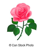 Pink rose Illustrations and Clip Art. 28,761 Pink rose royalty.