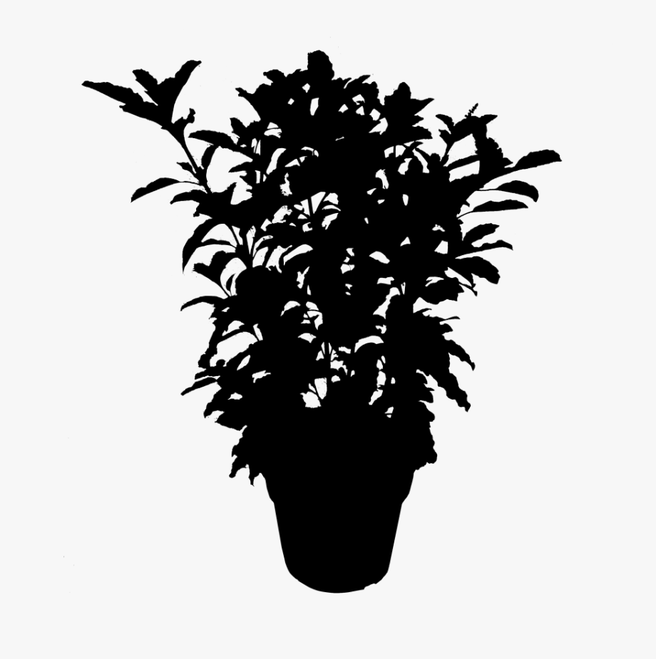 Plants Leaf Flowering Silhouette Plant Free Download.