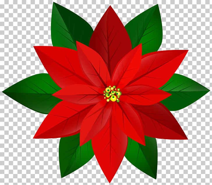 Poinsettia , Christmas Red Poinsettia , red poinsettia.