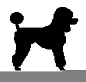 Free Clipart Of Standard Poodles.