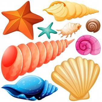 Seashells Vectors, Photos and PSD files.
