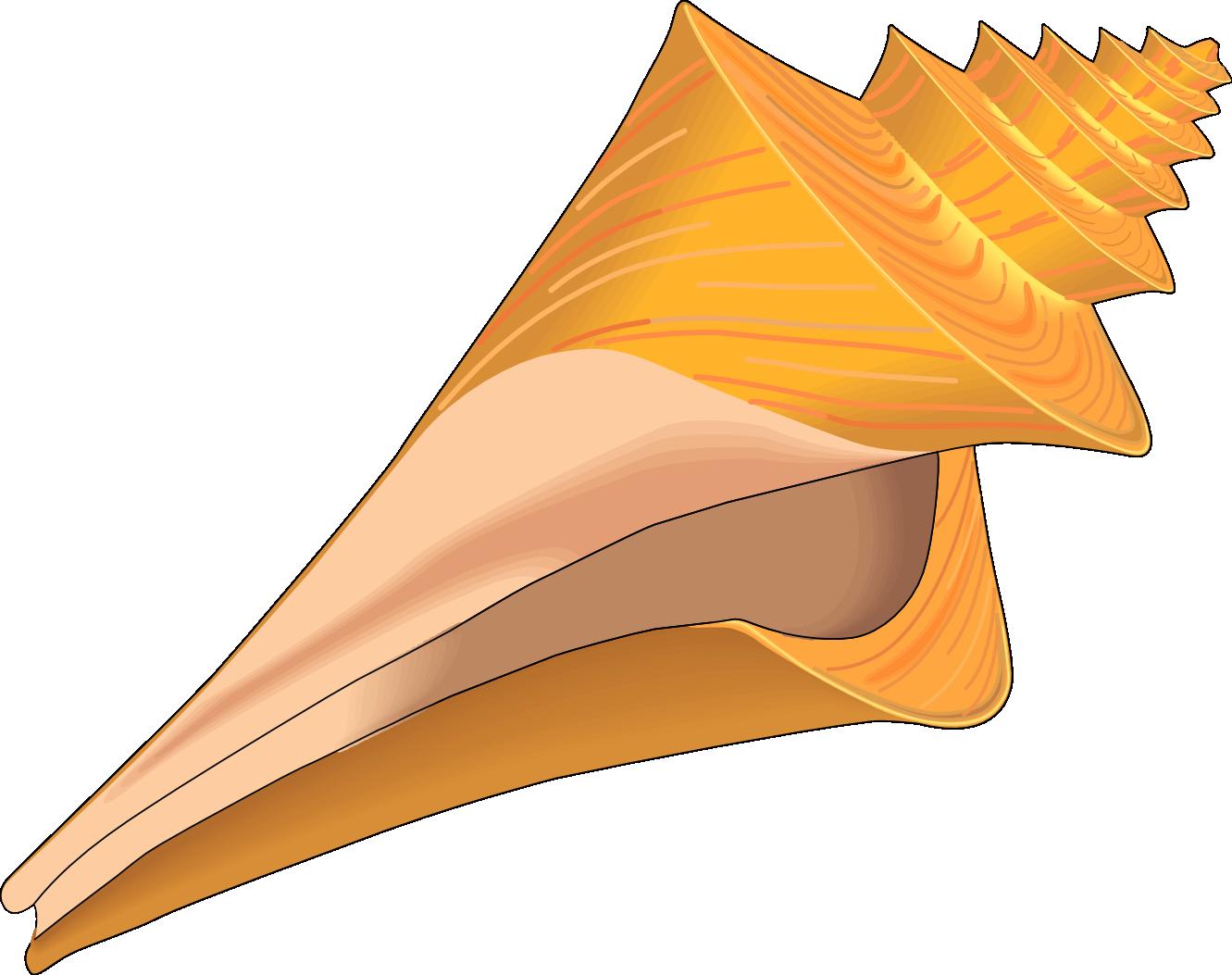 Free Seashells Cliparts, Download Free Clip Art, Free Clip.