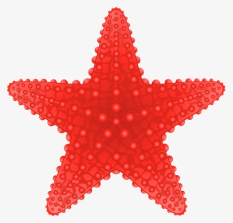 Free Starfish Clip Art with No Background.