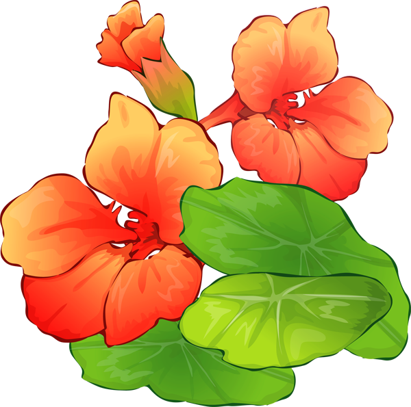 Free Summer Flower Cliparts, Download Free Clip Art, Free.