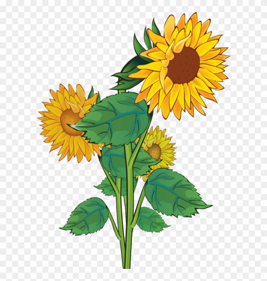 Free clipart sunflowers flowers Transparent pictures on F.