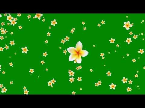 Flower Green Background Video Effects HD.