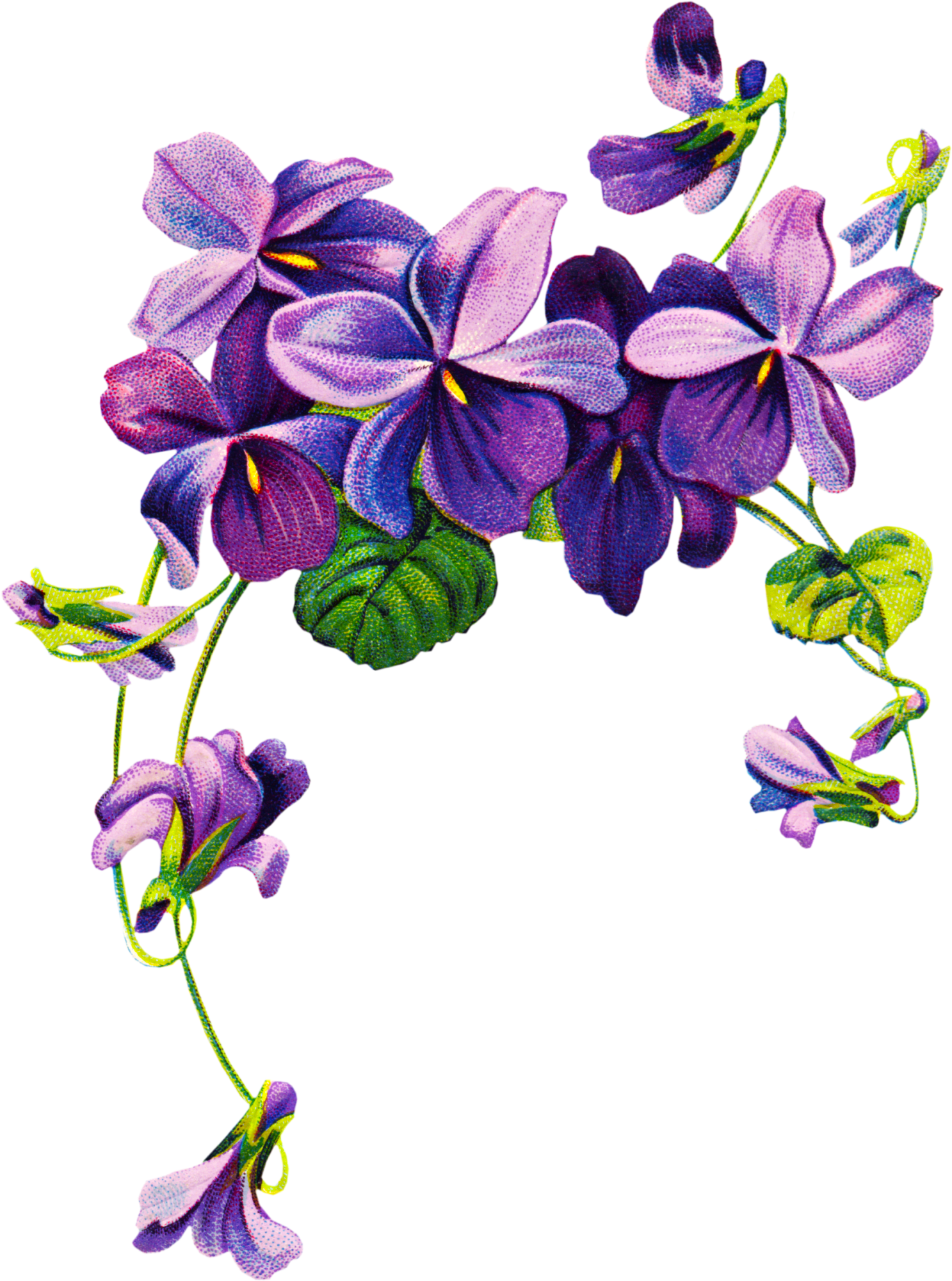 Violet Flower Tattoo Drawing.