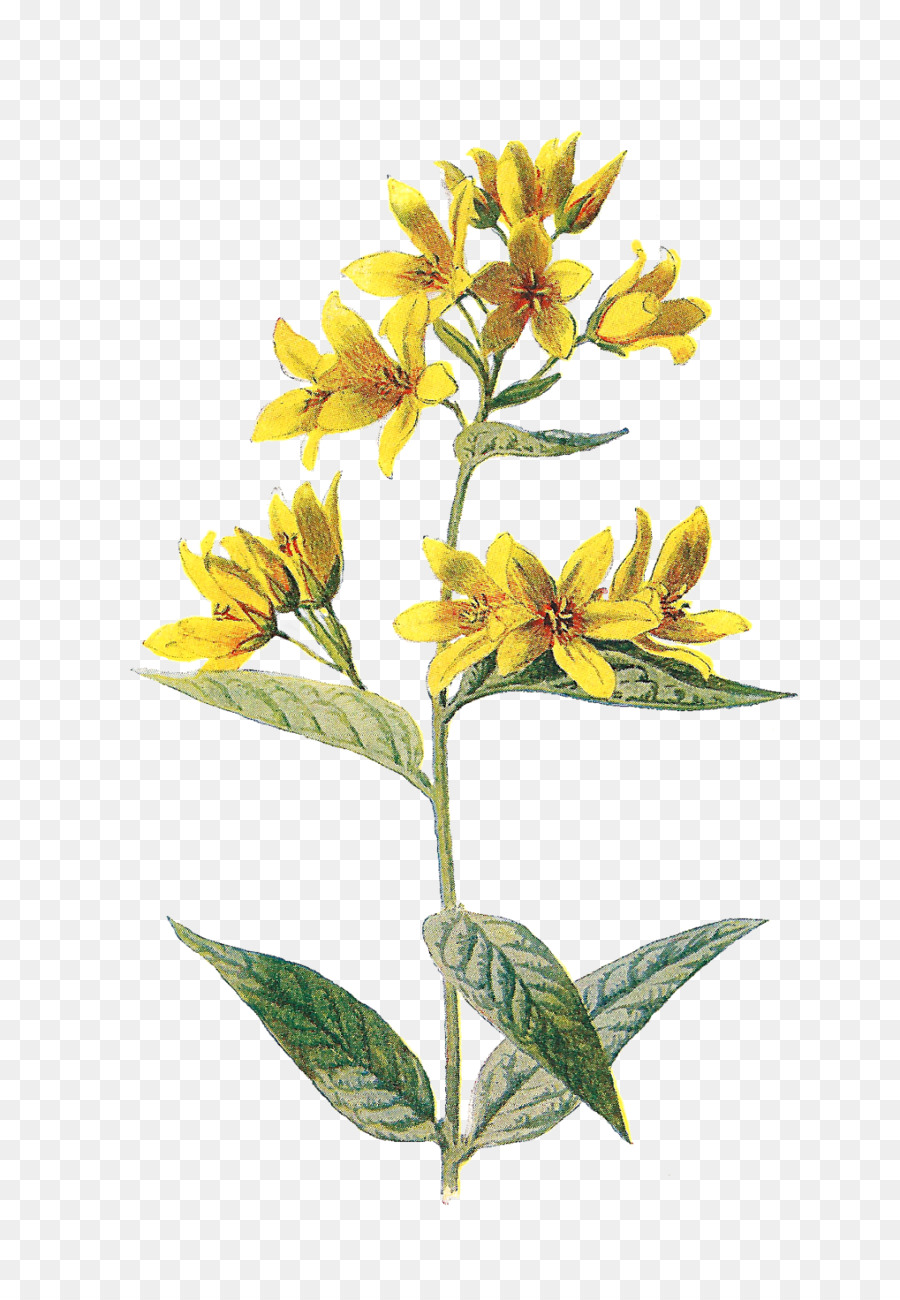 Wildflower Png & Free Wildflower.png Transparent Images.