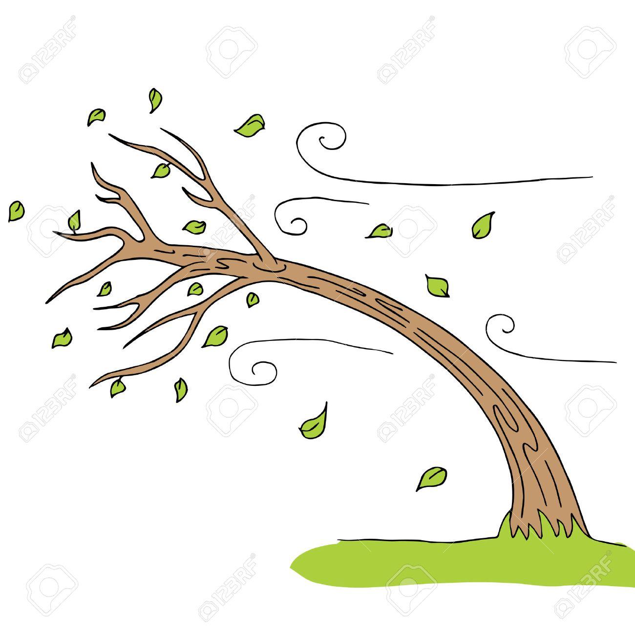 a wind blown tree..
