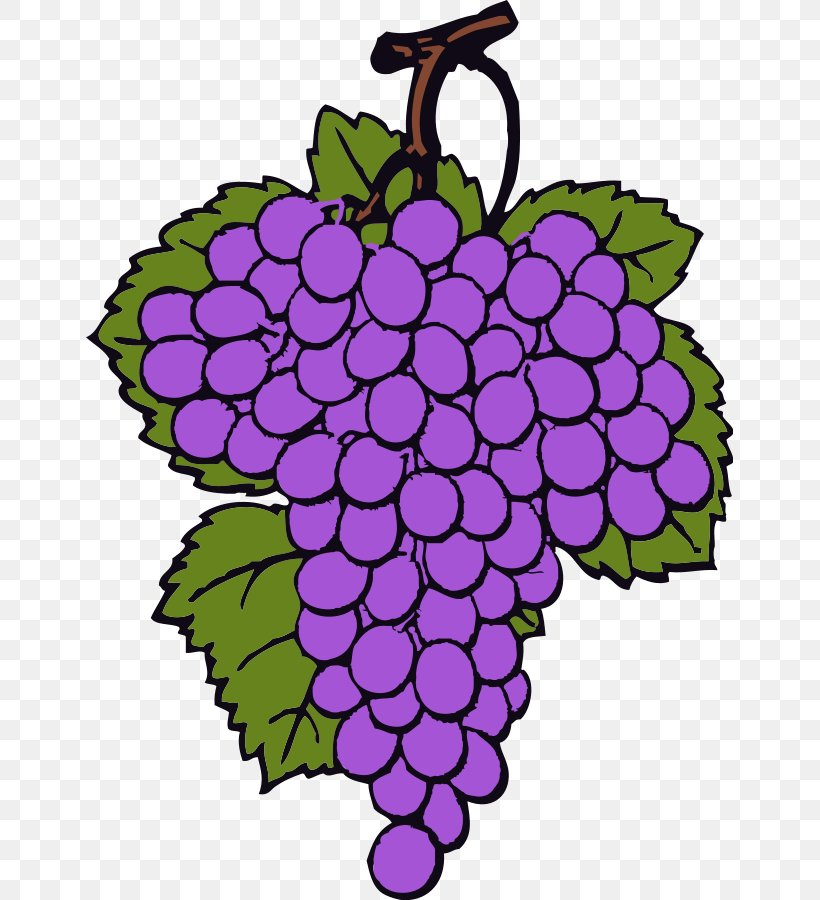 Wine Common Grape Vine Clip Art, PNG, 647x900px, Wine.