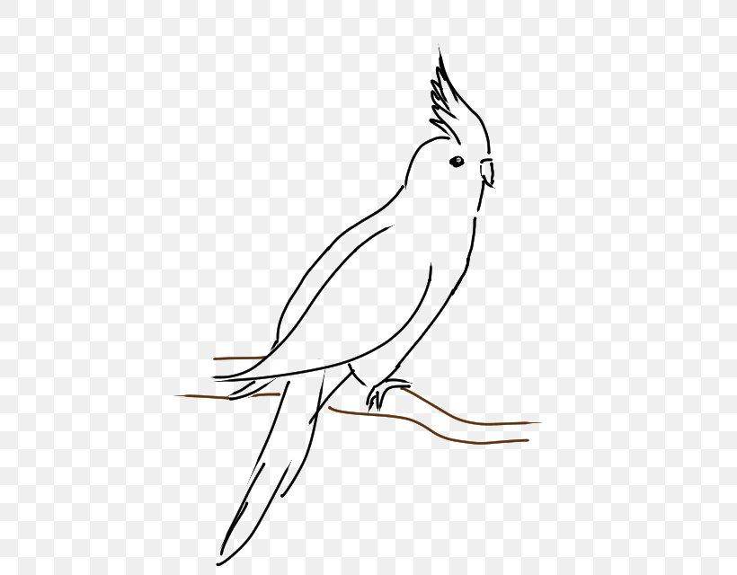 Cockatiel Line Art Drawing Cockatoo Clip Art, PNG, 448x640px.