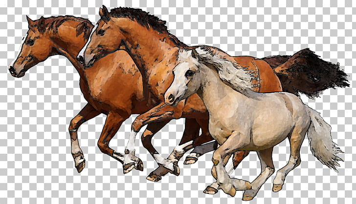 Horse Foal Colt , Running Horse s PNG clipart.