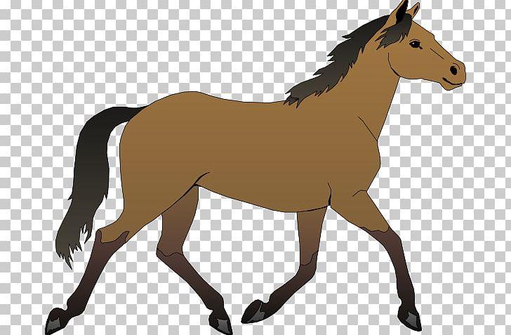Horse Foal Pony Colt PNG, Clipart, Bay, Black, Colt.