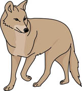 307 Coyote free clipart.