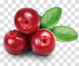 Cranberry transparent background PNG cliparts free download.