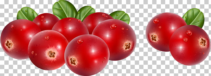 Lingonberry Cranberry Stock photography , cranberry PNG.