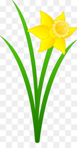 Daffodil Free content Clip art.
