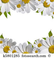 Daisy Illustrations and Stock Art. 8,717 daisy illustration and.
