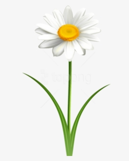 Free Daisy Flower Clip Art with No Background.