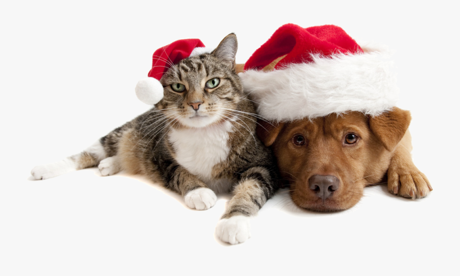 Christmas Cats And Dogs Png Download.
