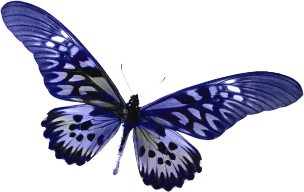Blue Transparent Butterfly Clipart.