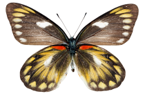 Butterfly Clipart PNG.