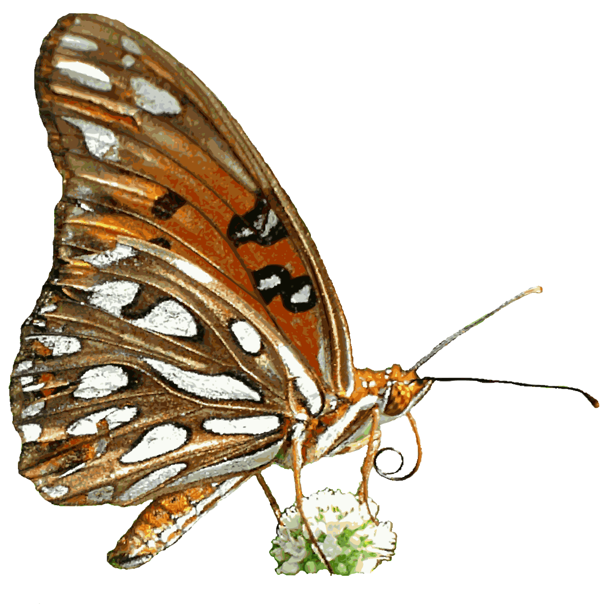 Free Butterfly Animated Clipart.
