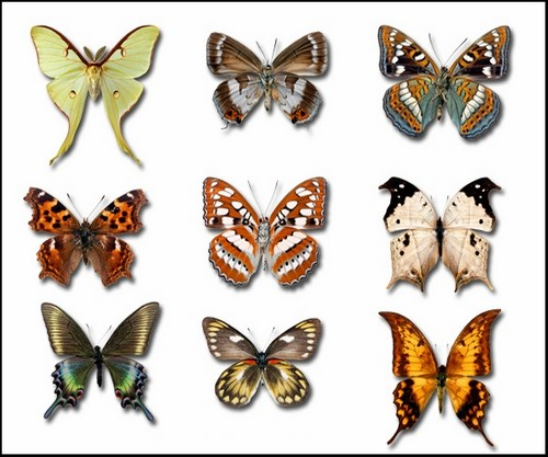Free Download Butterfly Clipart With Transparent Background.