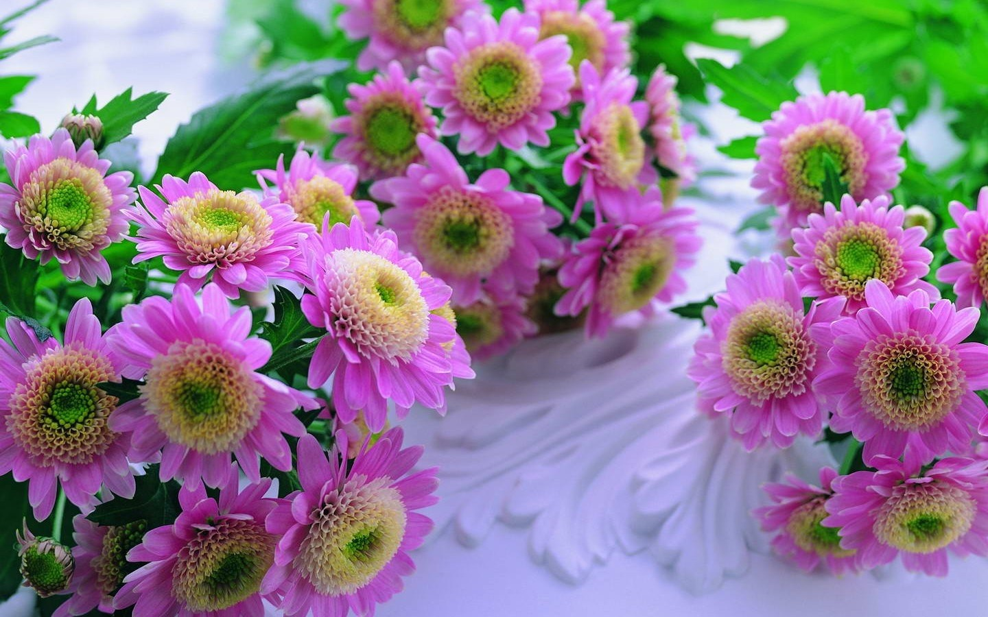 World's Top 100 Beautiful Flowers Images Wallpaper Photos Free.