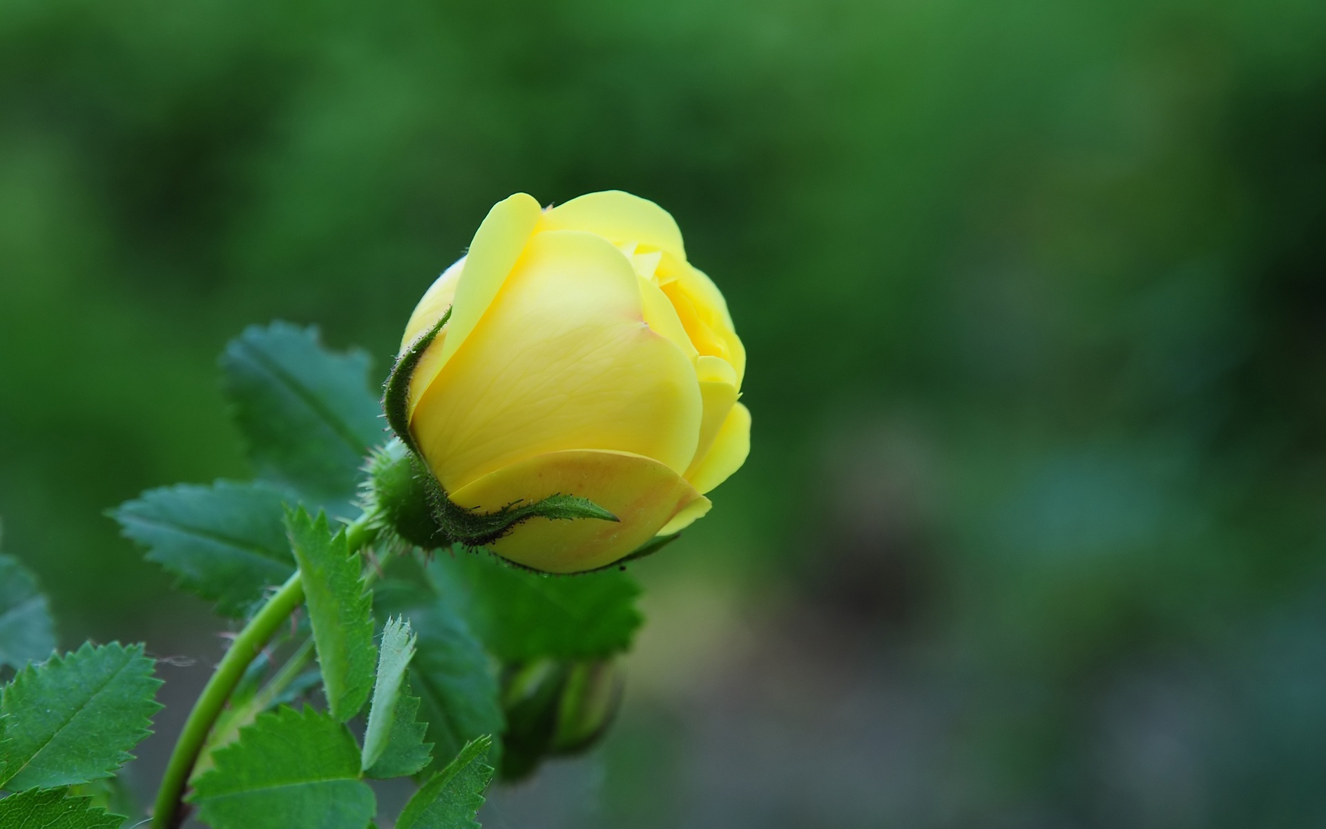 Free Flower Pic Download.