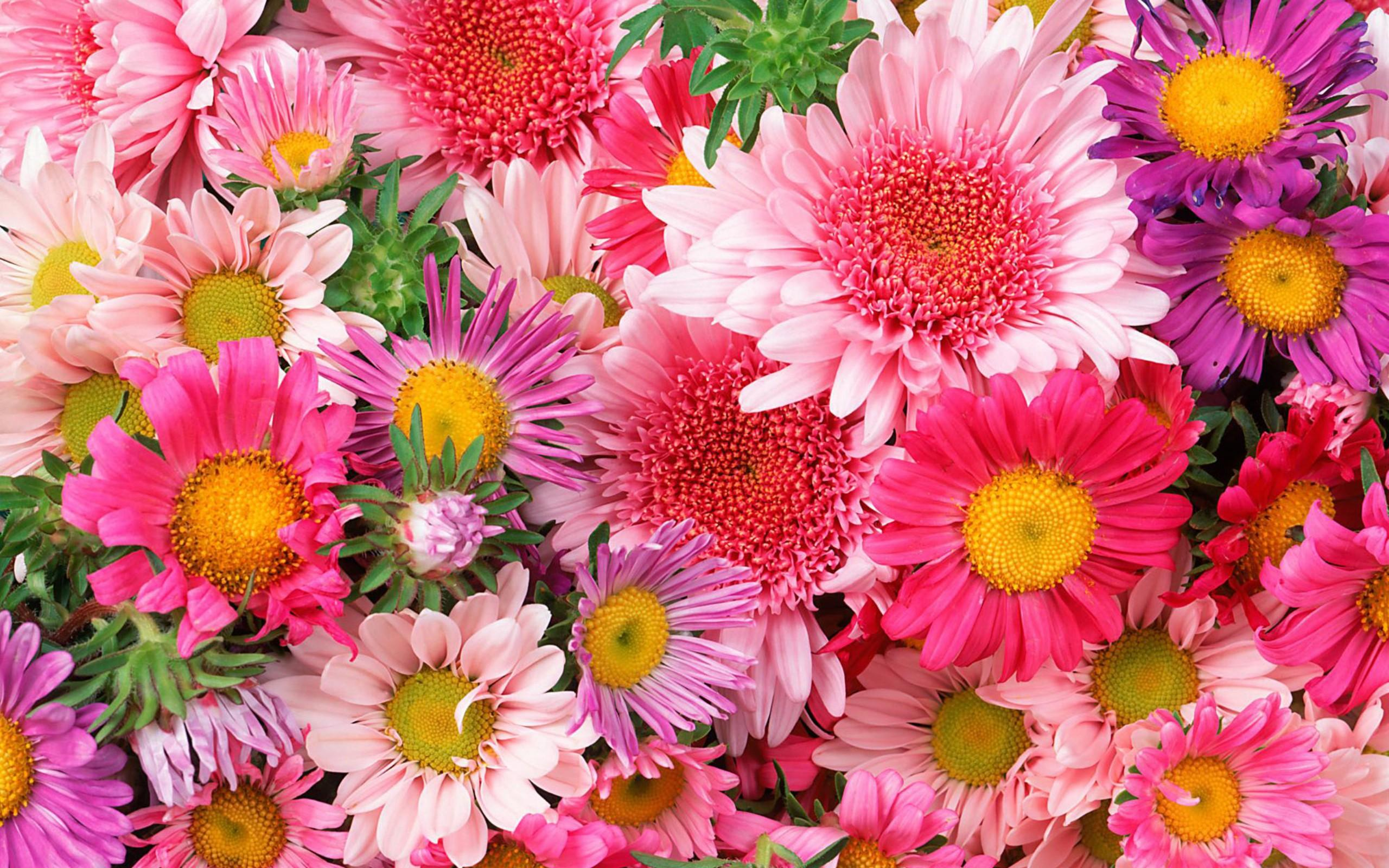 free download flower pictures - clipground