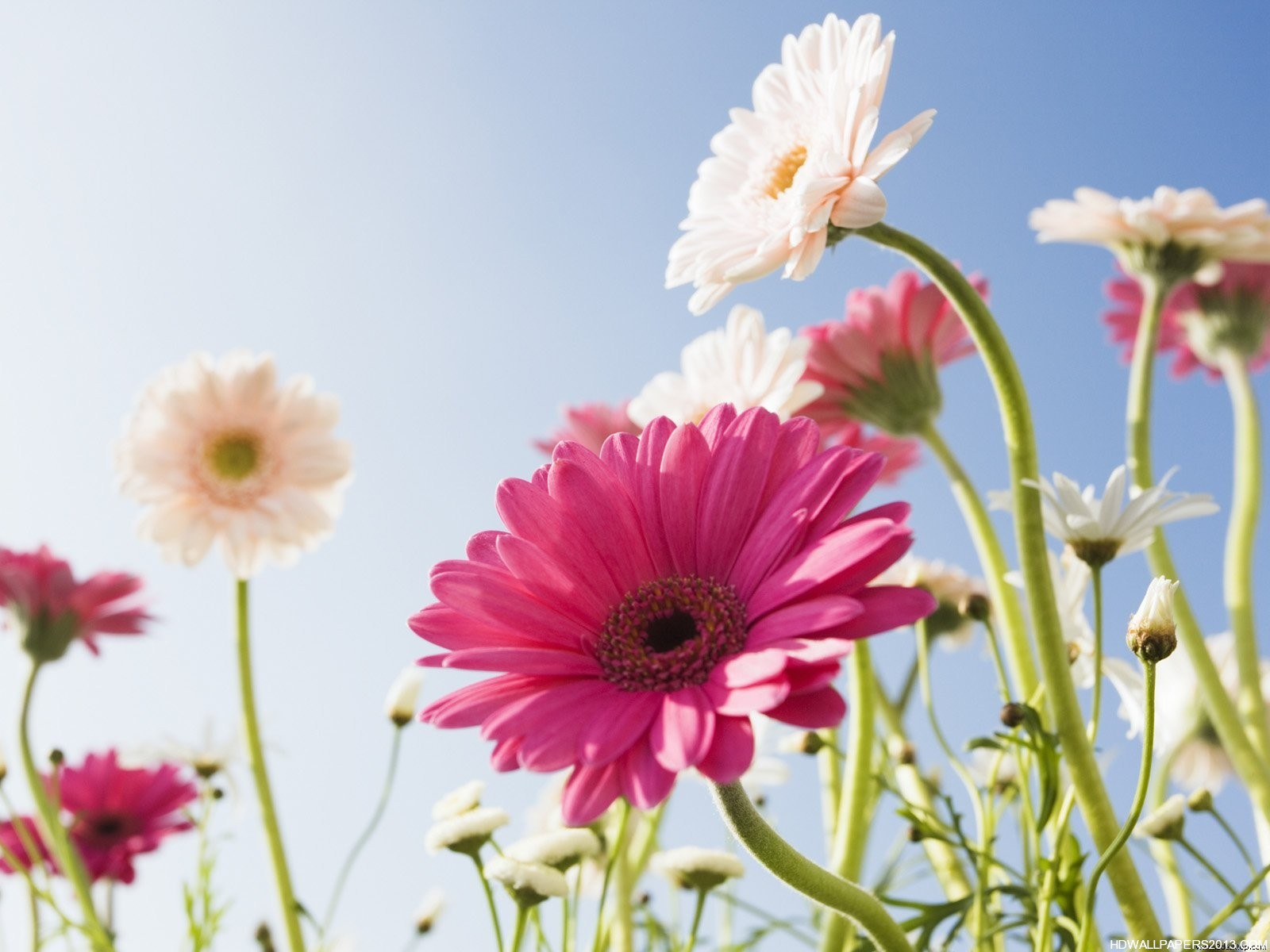Free download flower pictures clipground download flower images free dhlflorist Images