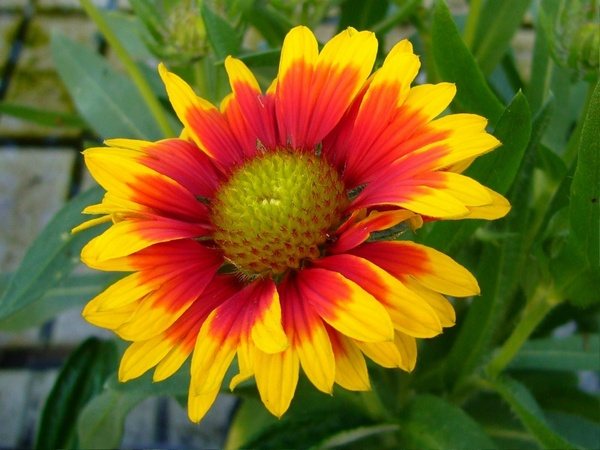 Flower images free stock photos download (10,941 Free stock photos.