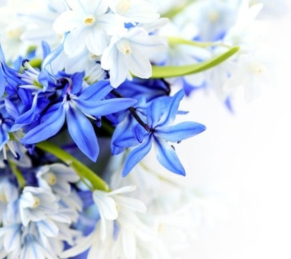 Flower images free stock photos download (10,942 Free stock photos.