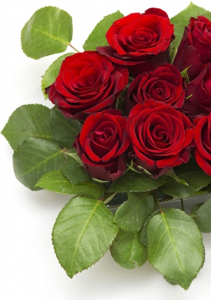 Rose flowers free stock photos download (11,705 Free stock photos.