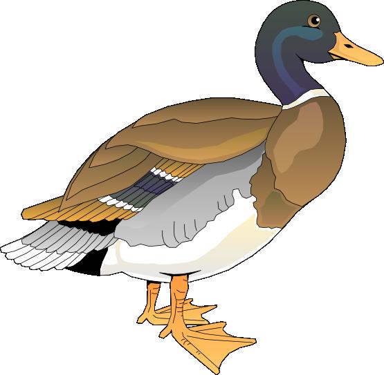 Free duck clip art dromgac top.