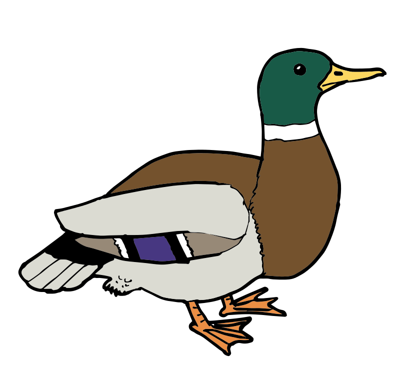Free Clipart: Duck ???.