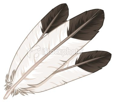 A collection of eagle feathers.