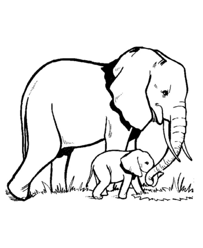 1000+ images about Elephant Coloring Pages on Pinterest.