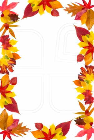2803 Fall Leaves free clipart.