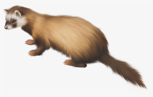 Free Ferret Clip Art with No Background.