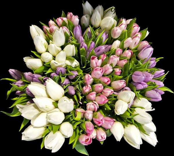 Flower bouquets pictures free stock photos download (10,966 Free.